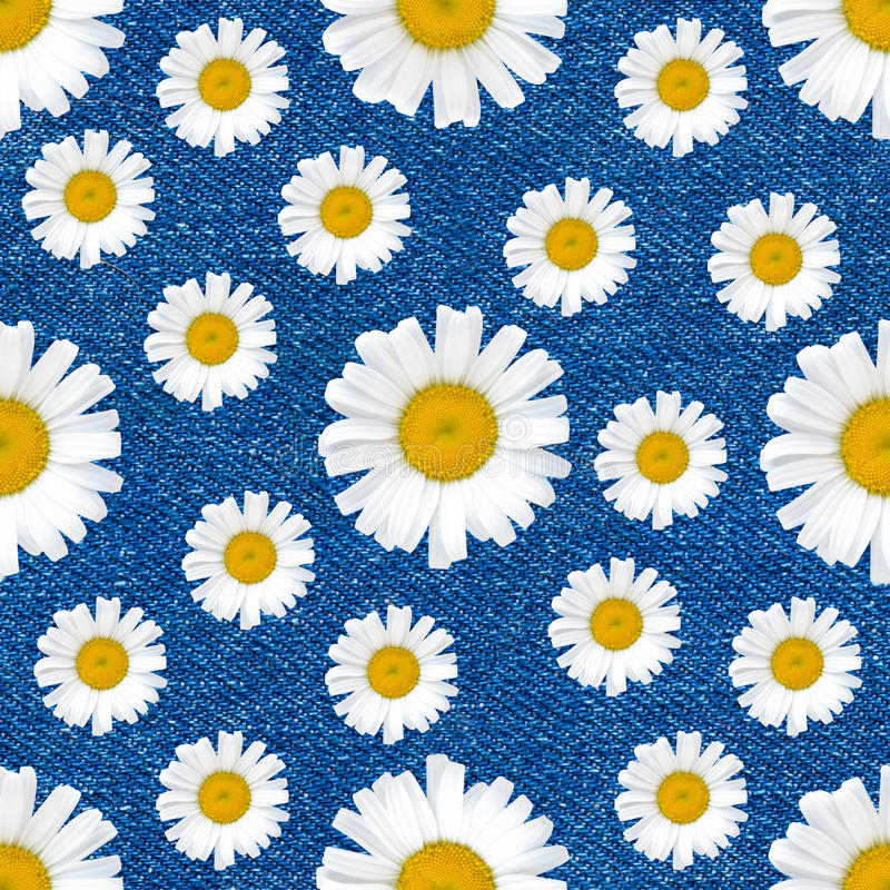 Daisy flowers seamless pattern on jeans background royalty free stock photos
