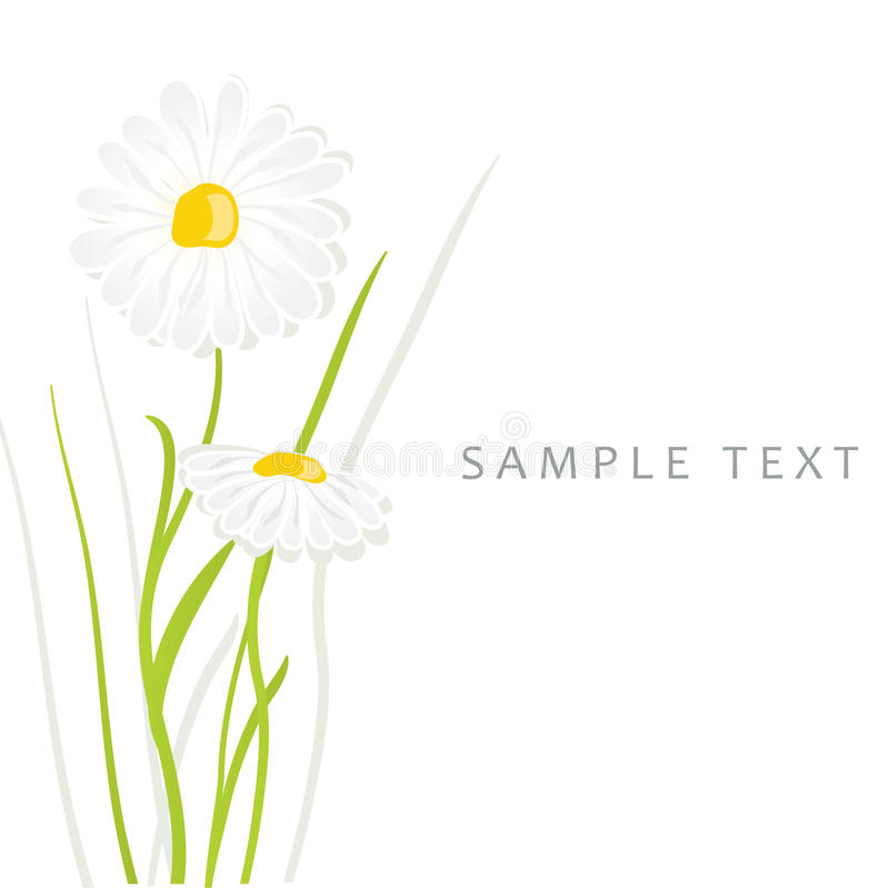 Free Daisy Flowers. Vector Card Royalty Free Stock Photography - 15954367