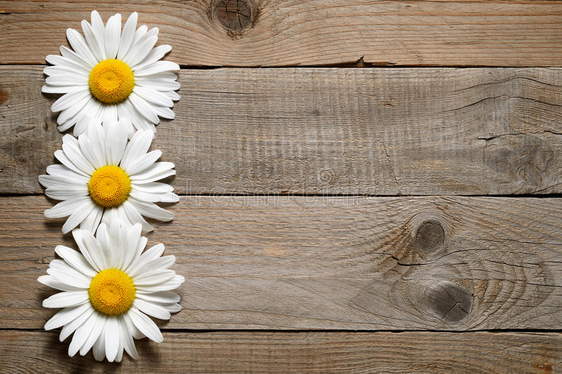 Daisy flowers on wood. En background stock photography