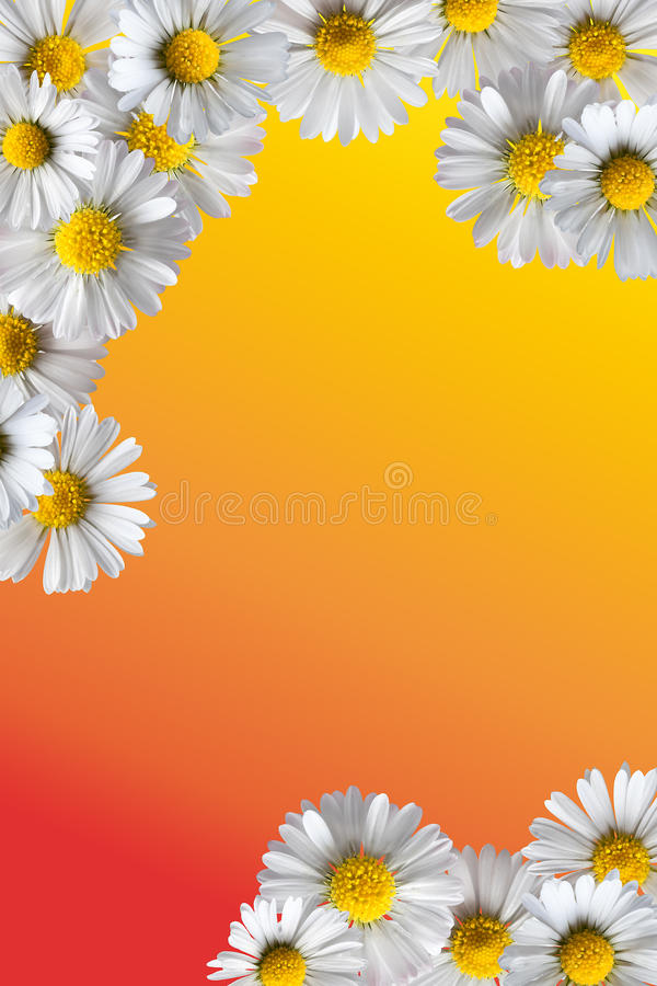 Download Daisy Frame Stock Image - Image: 9760581