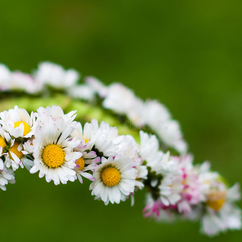 Download Daisy garland stock image. Image of european, close, finger - 22885337