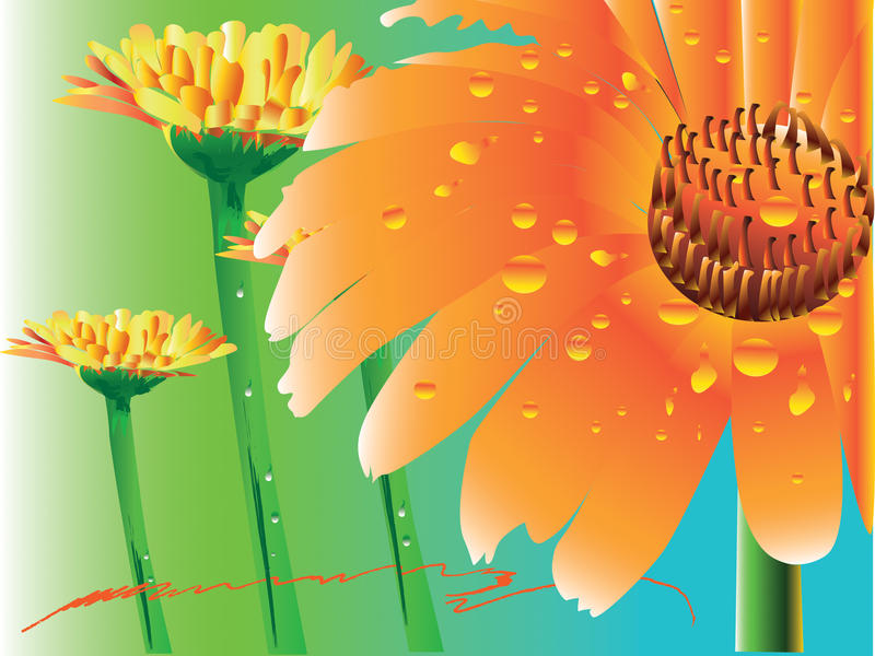 Daisy gerbera flower stock illustration