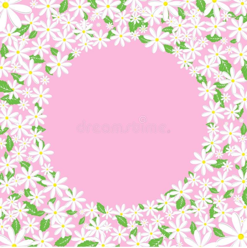 daisy granic ilustracji