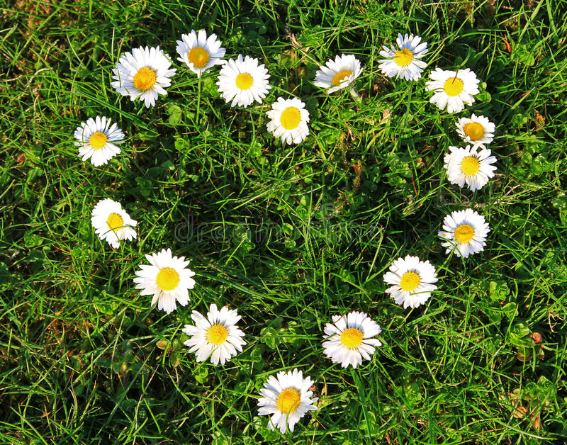 Download Daisy heart stock photo. Image of environment, bright - 13851944