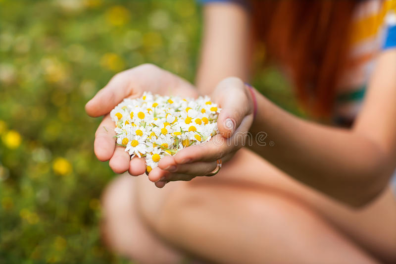 Daisy In His Hand Royalty Free Stock Photography