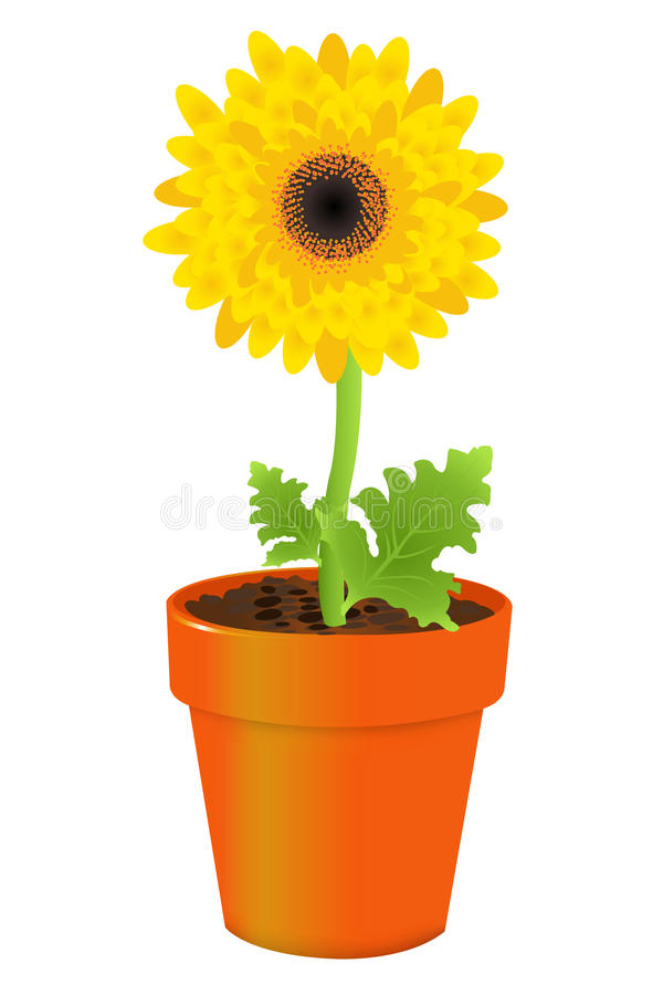 Free Daisy In Pot. Vector Royalty Free Stock Images - 13916289