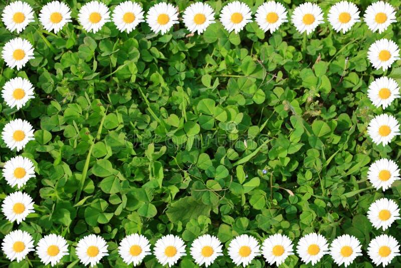 Download Daisy kader stock foto. Afbeelding bestaande uit kleurrijk - 39110464