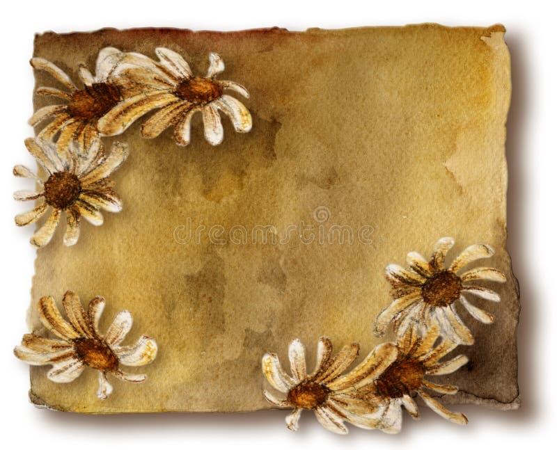daisy karciane stare ilustracji