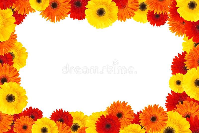 daisy kwiat rama fotografia stock