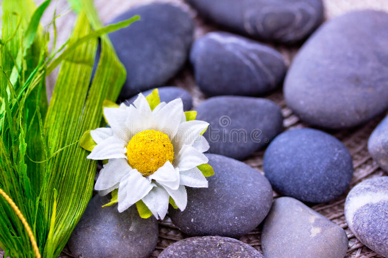 Download Daisy And Leaves Among Spa Stones Stock Image - Image: 24715639