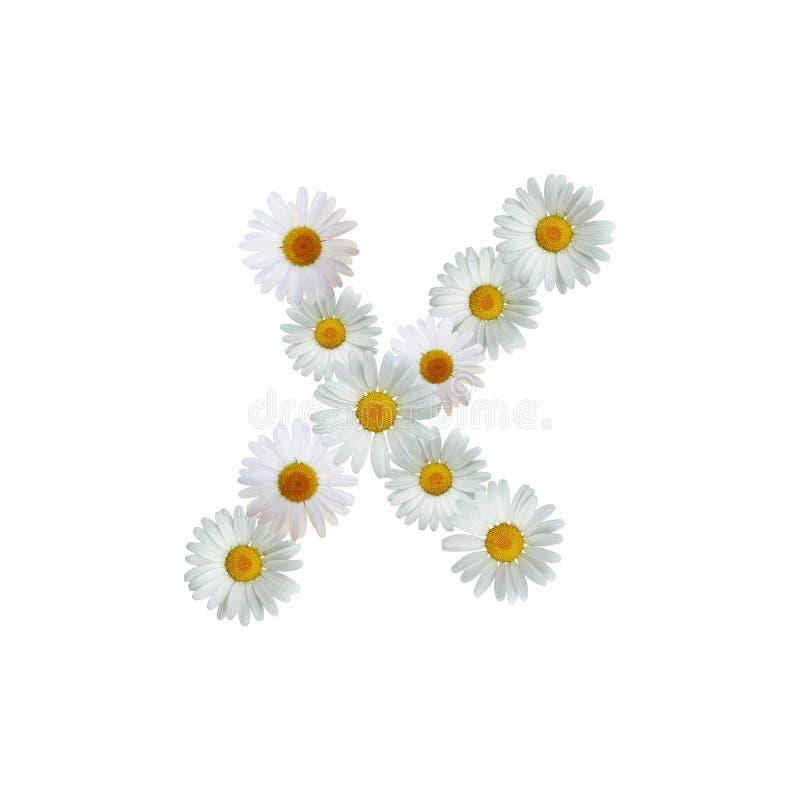 Daisy Letter X illustration stock