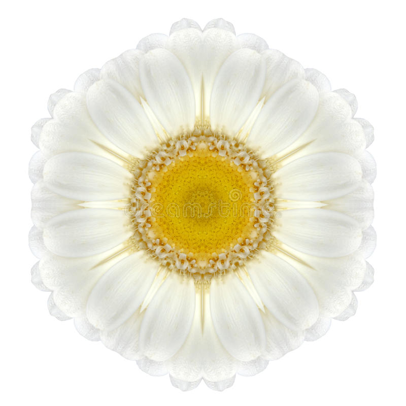 Daisy Mandala Flower Kaleidoscopic Isolated op Wit stock fotografie