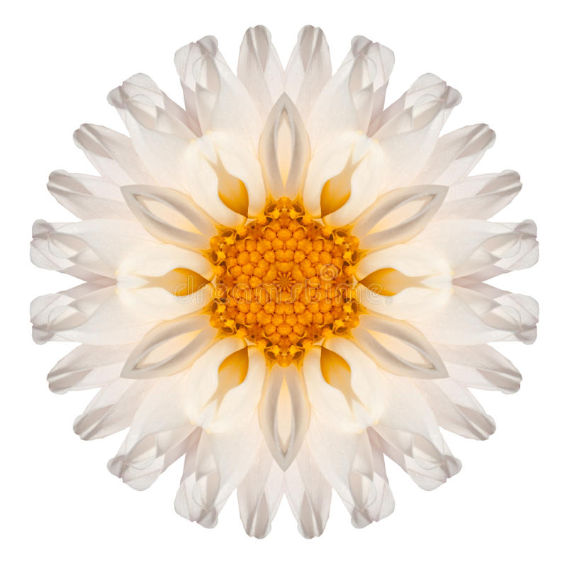 Daisy Mandala Flower Kaleidoscopic Isolated op Wit royalty-vrije stock afbeelding