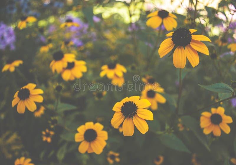 Daisy Moodscape gialla fotografie stock