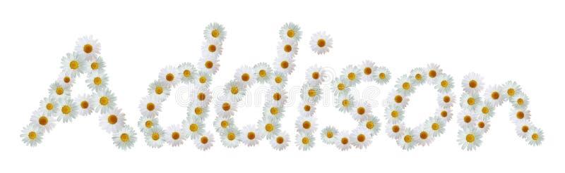 Daisy Name Addison ilustração stock