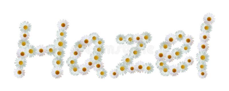 Daisy Name Hazel ilustração royalty free