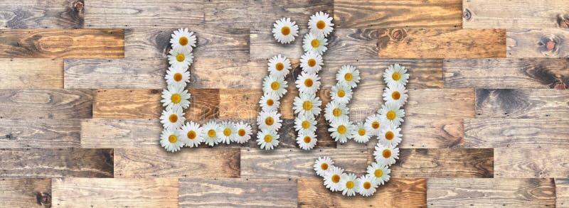 Daisy Name Lily Wood Background ilustração do vetor