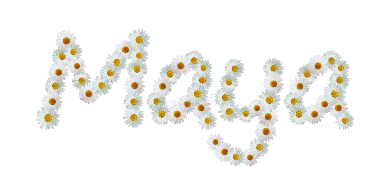 Daisy Name Maya ilustração do vetor