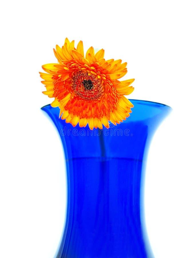 Daisy op blauwe vaas stock afbeelding