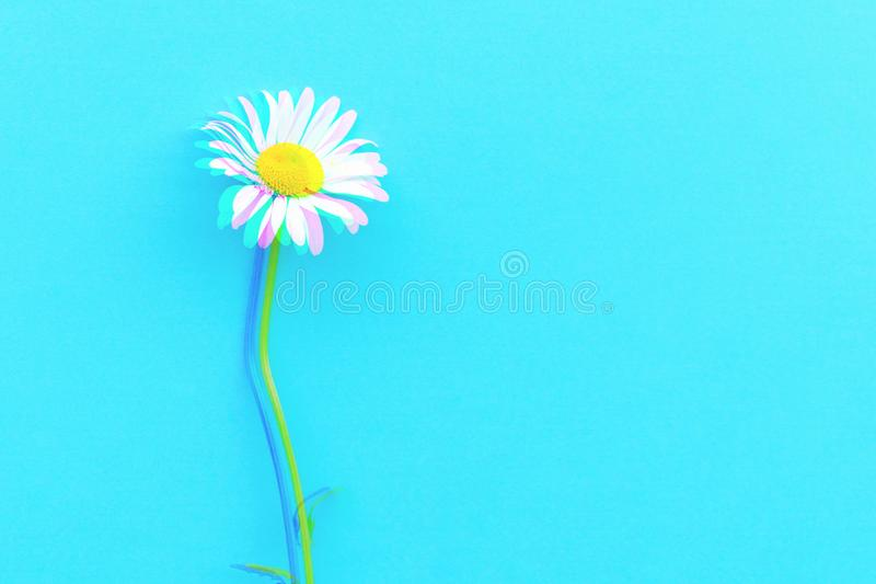 Daisy pattern. Flat lay spring and summer chamomile flowers on a blue background. Top view. Digital signal glitch effect rgb shi royalty free stock photos