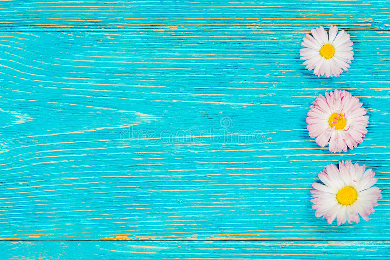 Download Daisy On Rustic Turquoise Wooden Desk Stock Photo