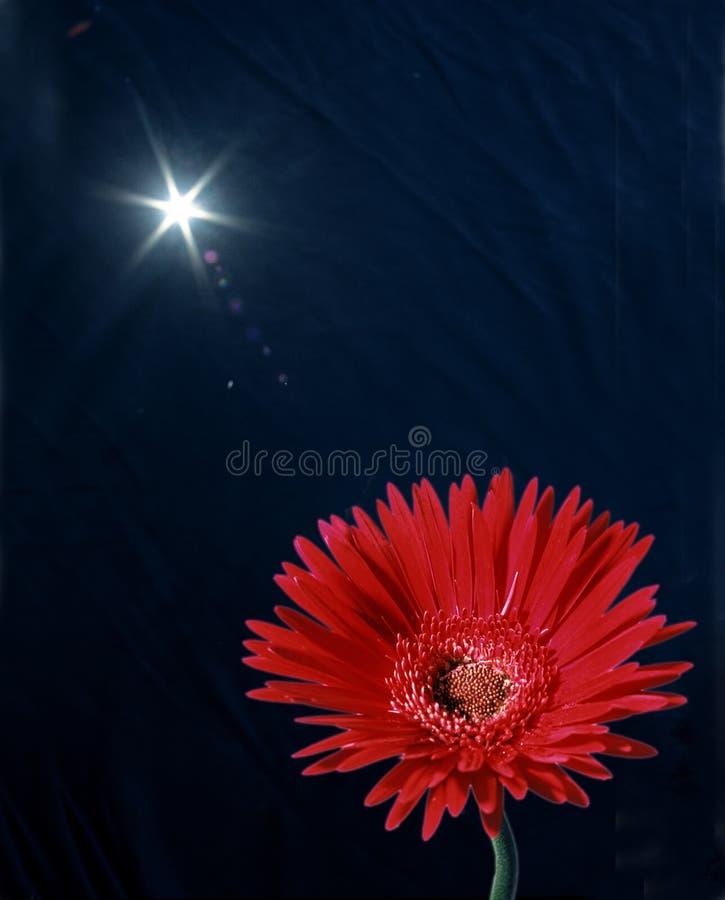 Download Daisy słońce obraz stock. Obraz złożonej z niebo, czerwień - 128743