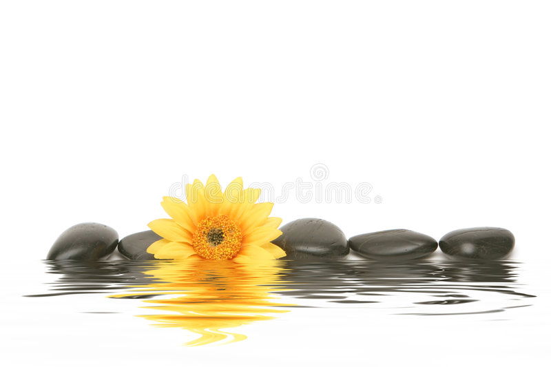 daisy spa πέτρες στοκ εικόνες με δικαίωμα ελεύθερης χρήσης