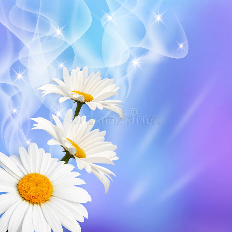Download Daisy And Stars Stock Image - Image: 27140951