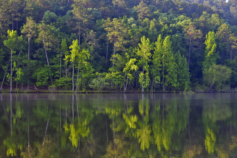 Daisy State Park fotografia stock