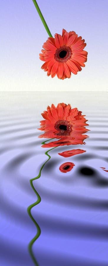 daisy tła gerbera zdjęcia różowego pastelowy white royalty ilustracja
