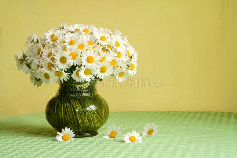 daisy tabela bogactwa bukiet. fotografia stock