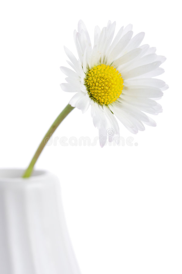 Download Daisy in a vase stock photo. Image of growth, flora, object - 2188044
