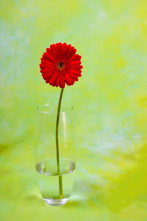 Daisy in vase on green stock image