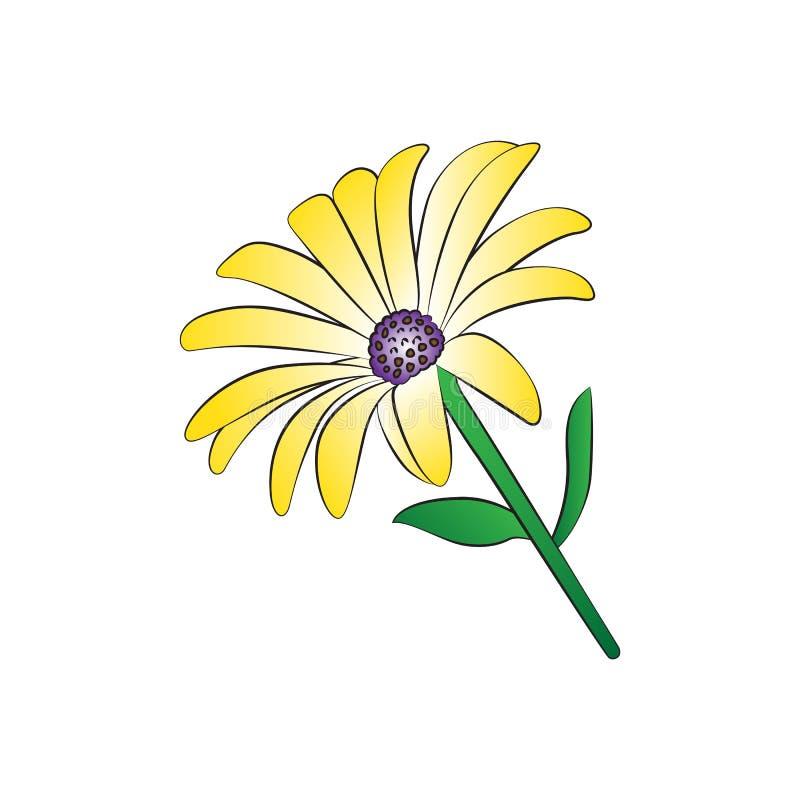 Daisy. Vector cartoon daisy on white background stock illustration