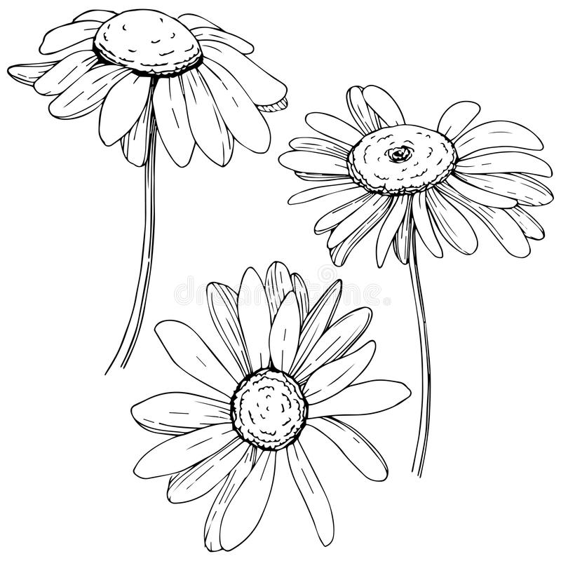 Daisy in a vector style isolated. vector illustration