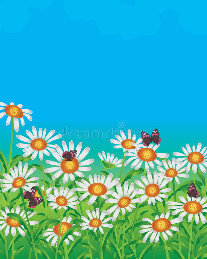 Daisy white field. Illustration white daisy flower field blue color background butterflies backdrop template graphic stock illustration