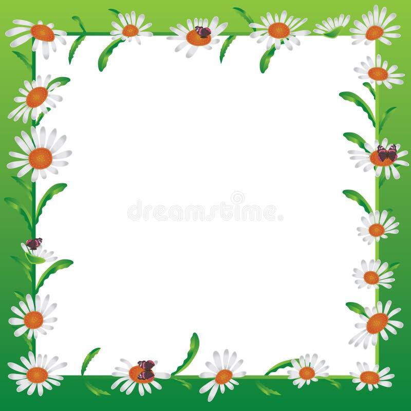 Daisy white frame. Illustration green background daisy white backdrop butterflies white frame template graphic design stock illustration