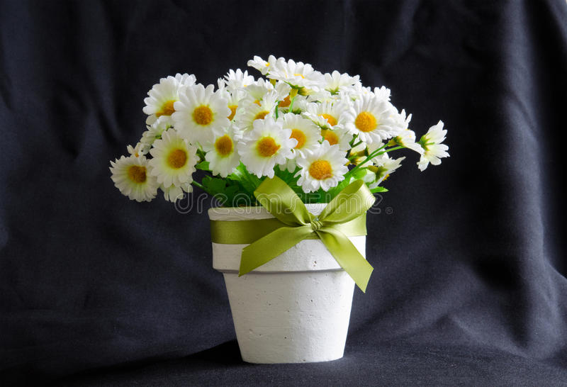 Daisy in the white little pot, on black background royalty free stock photos