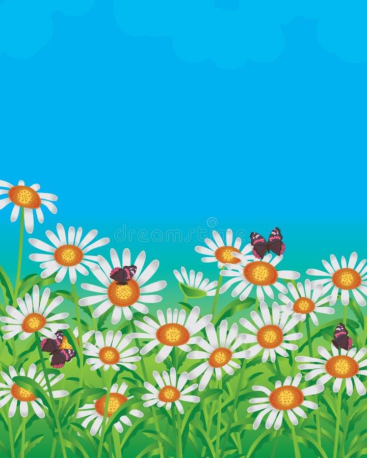 Daisy wit gebied stock illustratie