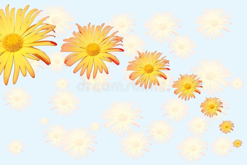 daisys стоковое фото