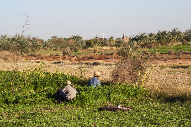 Dakhla, Ägypten - 25. Dezember 2006: Arbeiten an den Feldern bei Dahl stockfoto