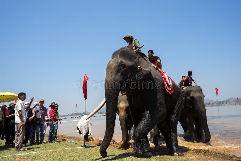 Daklak, Vietnam - Maart 12, 2017: Olifanten bij het rennen festival door LAK-meer in Dak-LAK, centrumhoogland van Vietnam stock foto's