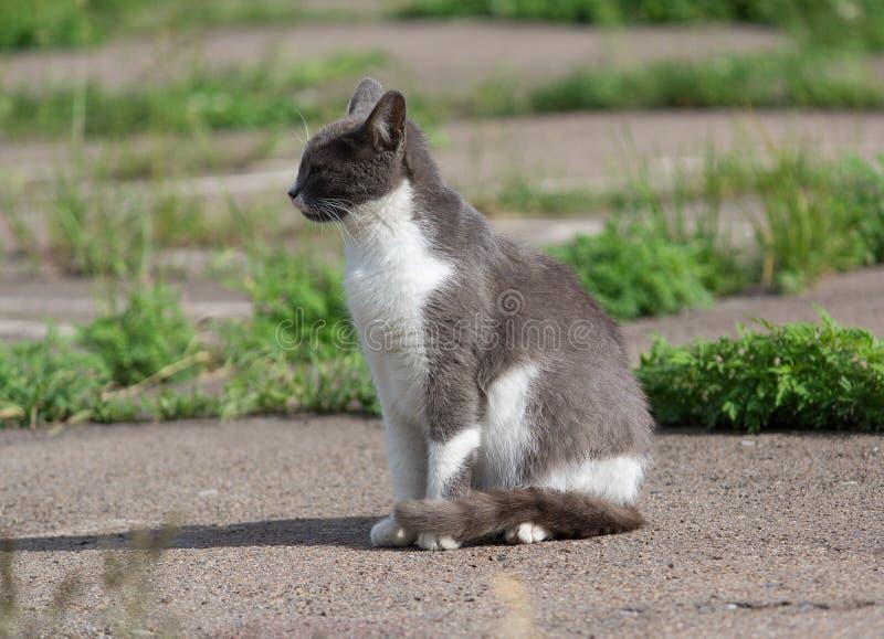 Dakloze grijze kat die in de zon zonnebaden royalty-vrije stock foto's