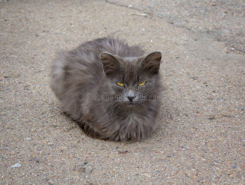 Dakloze grijze kat met gele ogen royalty-vrije stock fotografie