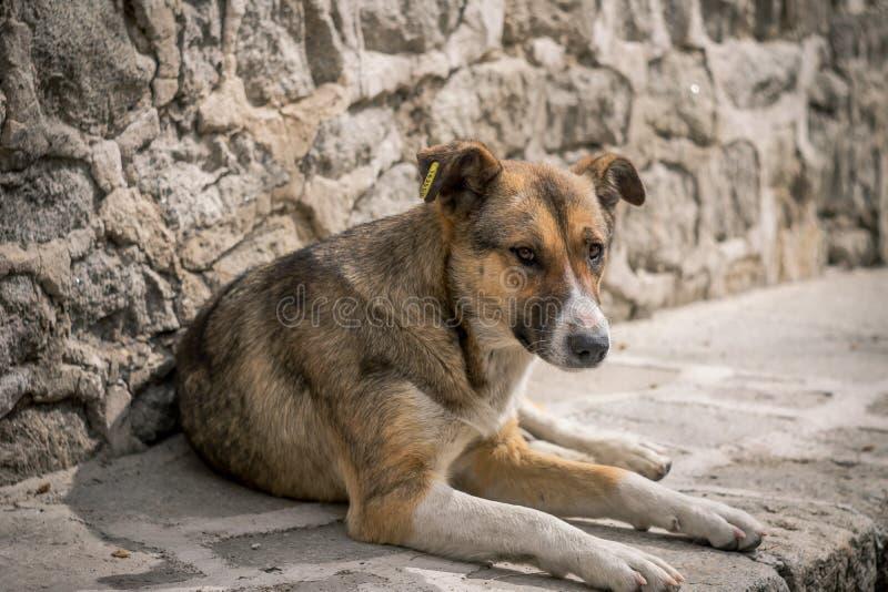 Dakloze hond royalty-vrije stock fotografie