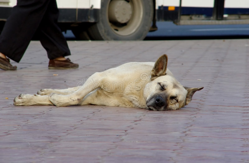 Dakloze hond. royalty-vrije stock fotografie