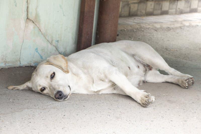 Dakloze hond De hongerige bastaard is vermoeid Eenzame, droevige hond die op de straat liggen die op de eigenaar wachten Depressi stock fotografie