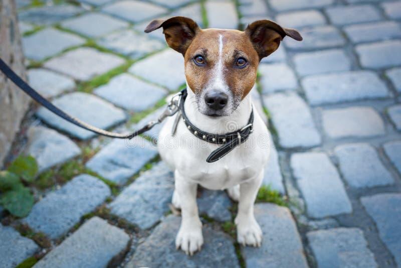 Dakloze hond eenzaam met leiband royalty-vrije stock fotografie