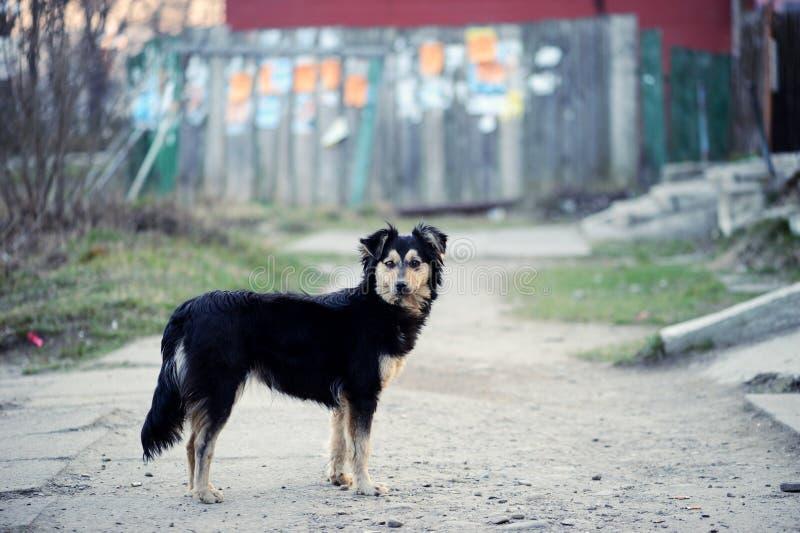 Dakloze hond op de straat stock foto's