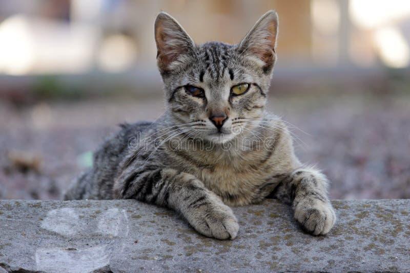 Dakloze kat besmet met katachtige herpesvirus of chlamydiosis royalty-vrije stock foto